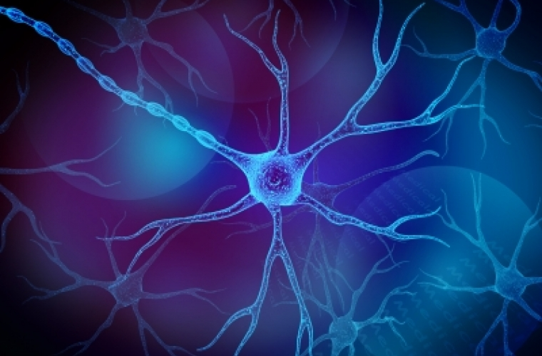 Image of neuron.