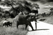 Image of an elephant and baby elephant walking.