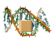 Image of DNA with a lock in front of it